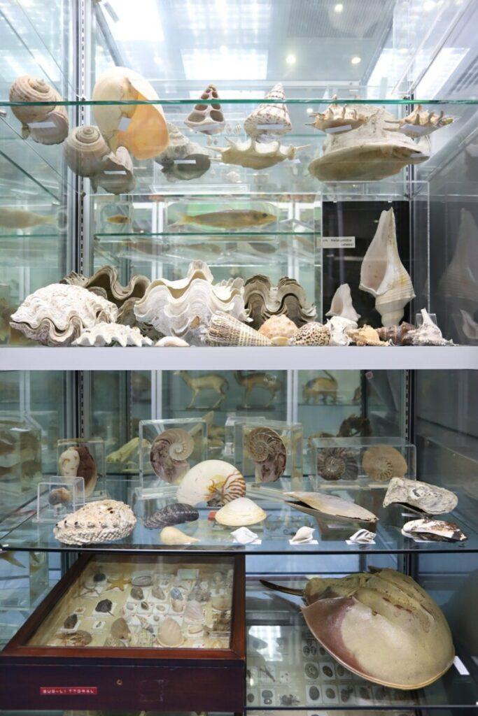 週末親子遊-香港首個-生物多樣性-博物館